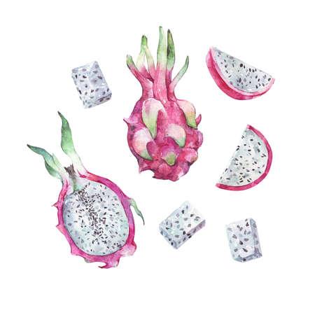 fresh dragon fruit watercolor illustration isolated