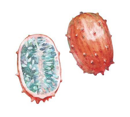 half full of ripe kiwano watercolor illustration