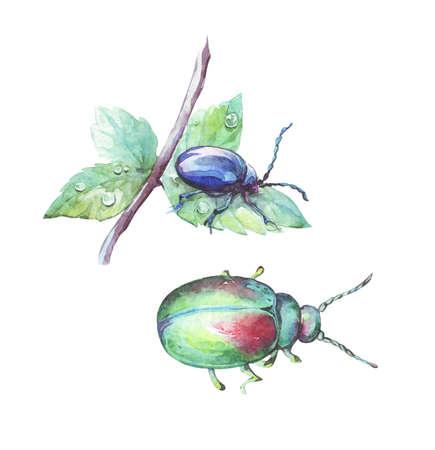 shiny scarab and alder leaf beetle watercolor art Stock fotó