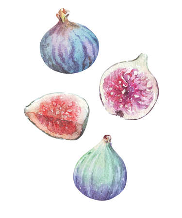 group of half and whole figs watercolor art isolated on white