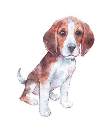 beagle puppy isolated on white watercolor art
