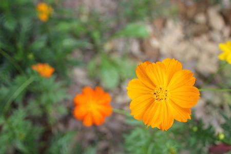 asteraceae: Asteraceae Stock Photo
