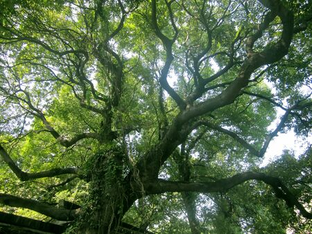 arbres silhouette: Les branches de l'arbre