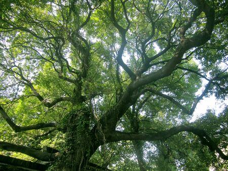 Ramas de árboles  Foto de archivo - 41866061