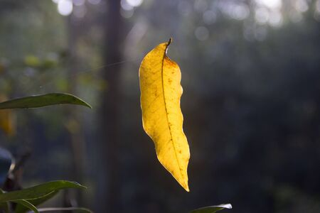 on leave: yellow leave Stock Photo