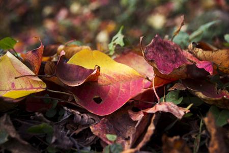 accumulation: Accumulation of leaves