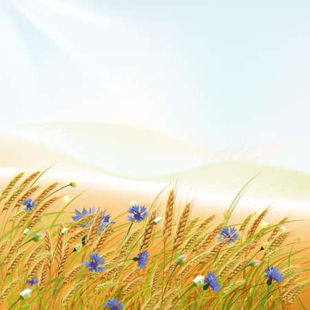 oat field: The illustration of  beautiful grass and wheat with flowers