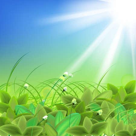 weegbree: De illustratie van mooie ganzen-groene gras