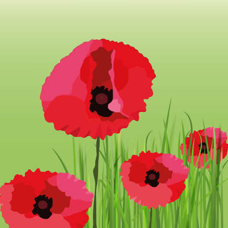 greenfield: The illustration of beautiful poppy flower background. Vector image.