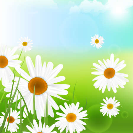 daisy wheel: The illustration of beautiful flowers. Vector image.