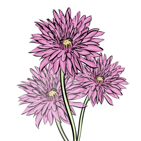 chrysanthemum mottled
