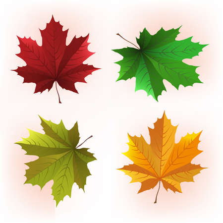 Decorative maple leaf in green and red colours Stock Vector - 25468095
