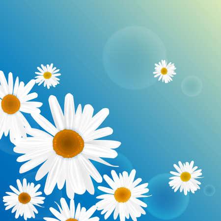 chamomel: The illustration of beautiful flowers. Vector image.