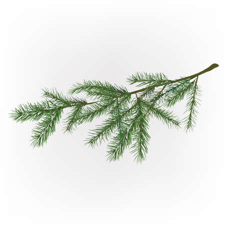 Vector illustration of christmas tree branche