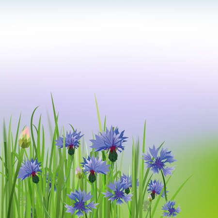 The illustration of beautiful cornflower background. Vector image.