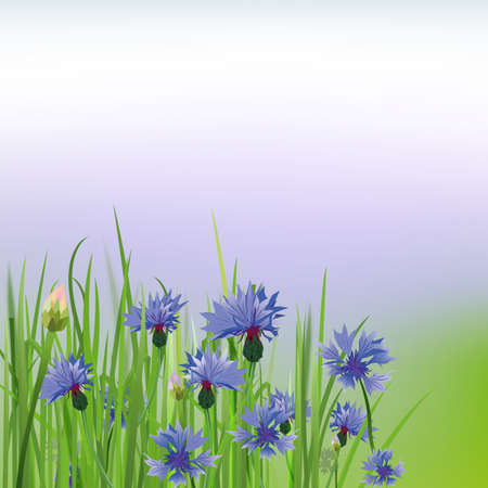 greenfield: The illustration of beautiful cornflower background. Vector image.