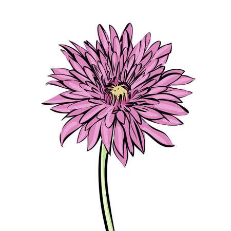 georgina: chrysanthemum mottled