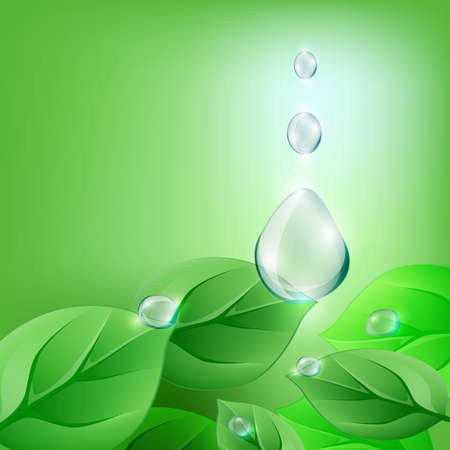 morning dew: The illustration of green leaf and water drop. Vector image Illustration
