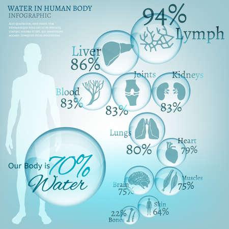 Water is de drijvende kracht van de natuur. De afbeelding van bio infographics met menselijke lichaamsorganen pictogrammen in transparante stijl. Ecologie en biochemie concept. Drink meer water. Vector afbeelding.