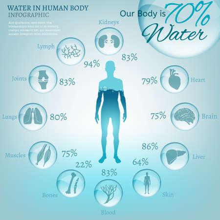corpo umano: L'acqua � la forza trainante di tutta la natura. L'illustrazione di infografica bio con gli organi del corpo umano icone in stile trasparente. Ecologia e concetto di biochimica. Bevi pi� acqua. Immagine vettoriale.