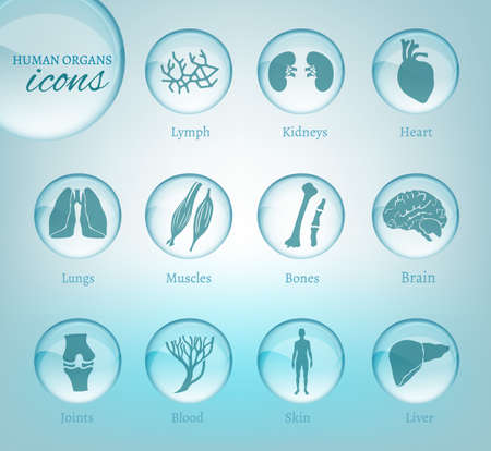 body parts: Vector editable collection of human body parts icons. K. Useful for inforchart and infographic