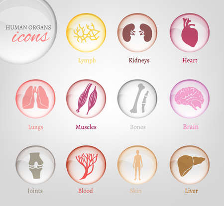 human anatomy: Vector editable collection of human body parts icons. Blood in transparent glossy style. Useful for inforchart and infographic