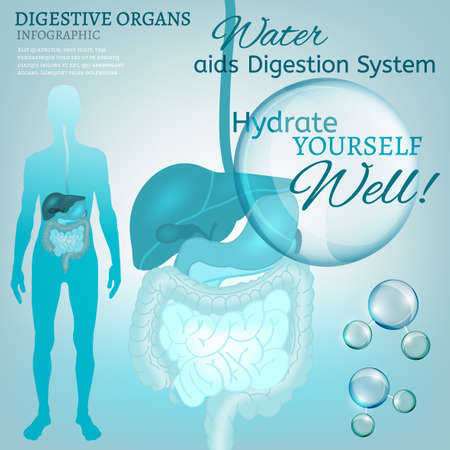 sistema digestivo humano: Water is the driving force of all nature. Vector illustration of bio infographics with human digestive system scheme in transparent style. Medicine and biochemistry concept. Keep your body healthy Vectores