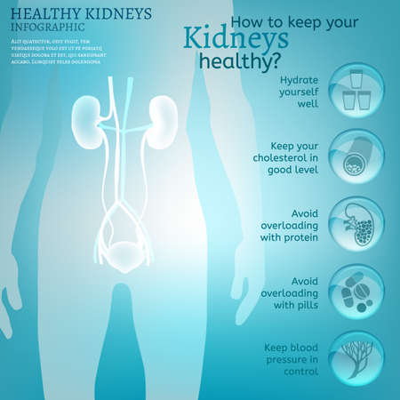 force of the nature: Water is the driving force of all nature. Vector illustration of bio infographics with human body organs icons in transparent style. Medicine and biochemistry concept. Keep your kidneys healthy