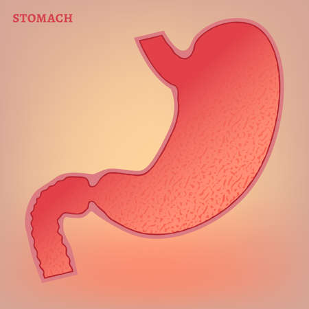 fundus of stomach: Beautiful vector illustration of medical stomach scheme. Editable abstract image in pink and red colors useful for a poster, icon, logo, placard, sign, ad and web banner creative design.