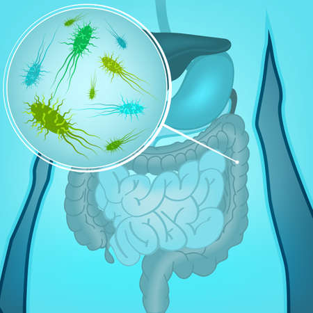Beautiful vector illustration of bacterial flora in human internal organs. Abstract medicine concept. Useful for poster, indographics, placard, leaflet, brochure, print, book and ad graphic design.