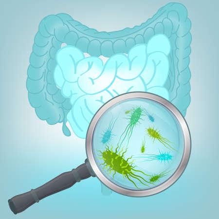 Ilustración vectorial hermosa de la flora bacteriana en los órganos internos humanos. Resumen concepto de la medicina. Útil para el cartel, indographics, cartel, folleto, folleto, la impresión, el libro y el diseño gráfico de anuncios. Foto de archivo - 52421978