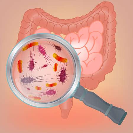 Mooie vector illustratie van de bacteriële flora in de interne organen. Abstract concept van de geneeskunde. Nuttig voor poster, indographics, aanplakbiljet, folder, brochure, print, boek en ad grafisch ontwerp.