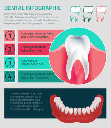 incisor: Human teeth dental infographic. illustration with Lower jow teeth. Medical image in green, pink and dark blue colors on a background useful for poster, leaflet or brochure graphic design. Illustration