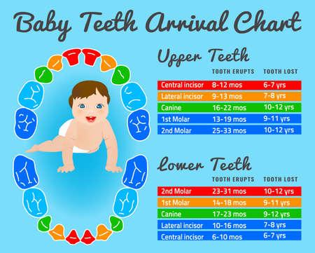 El diente de bebé Prelimanary gráfico de la erupción. Ilustración del vector. editar la imagen en colores brillantes en un background.Children azules dientes infográficas con un niño sonriente divertida.