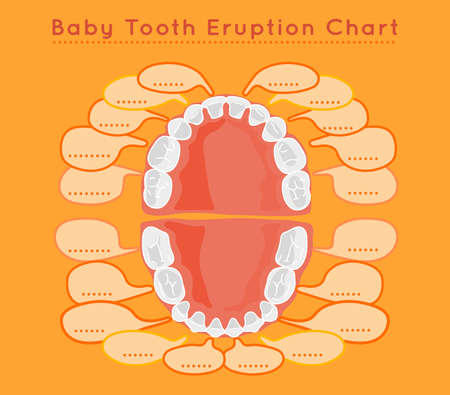 shedding: Baby prelimanary tooth eruption chart on a light orange background.Children teeth infographic. Poster or leaflet template.