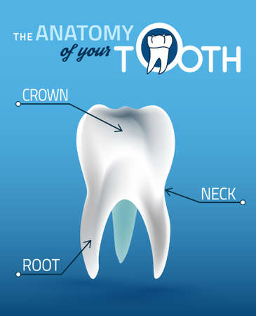 dentin: Human tooth dental infographic. Medical image in wight, blue and dark blue colors useful for poster, leaflet or brochure graphic design.