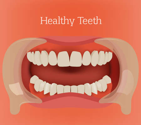 physiologic: Healthy teeth illustration. Vector dental image with orthodontic bite. Human anatomy concept in red and pink colors.