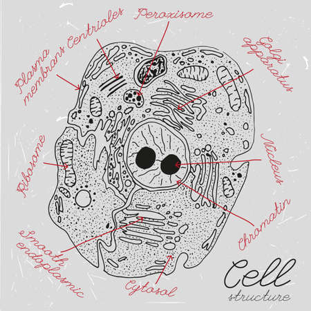 golgi apparatus: cell drawing in dark grey and white colours. cell structure illustration with elements names in unique artistic style on a textured background. Biology creative concept.