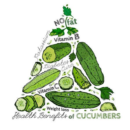Beautiful handdrawn pattern in bright green colours. Vector illustration with cucumbers and cucumber slices in unique artistic style on a white background. Natural and organic food creative concept. Ilustrace
