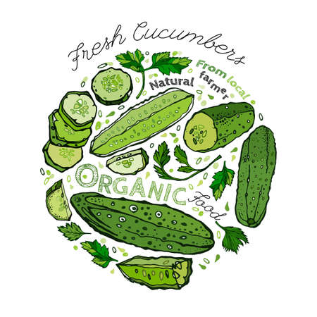 cuke: Beautiful handdrawn pattern in bright green colours. Vector illustration with cucumbers and cucumber slices in unique artistic style on a white background. Natural and organic food creative concept. Illustration