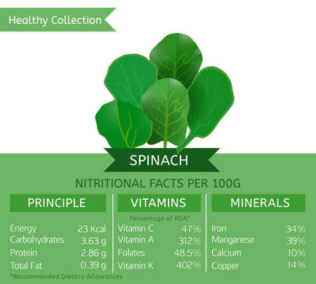 useful: Spinach health benefits. Vector illustration with useful nutritional facts. Essential vitamins and minerals in healthy food. Medical, healthcare and dietory concept.