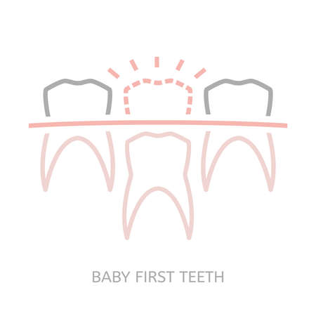 dentition: Baby first tooth