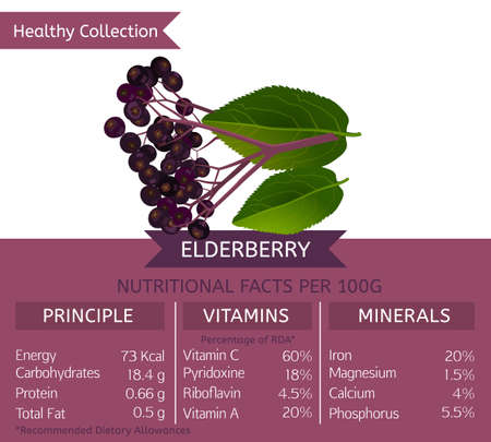 Elderberry health benefits. Vector illustration with useful nutritional facts. Essential vitamins and minerals in healthy food. Medical, healthcare and dietory concept. Çizim