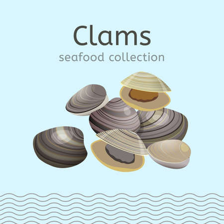 mediterranean diet: Clams on a light background. Seafood collection. Vector illustration. Stock Photo