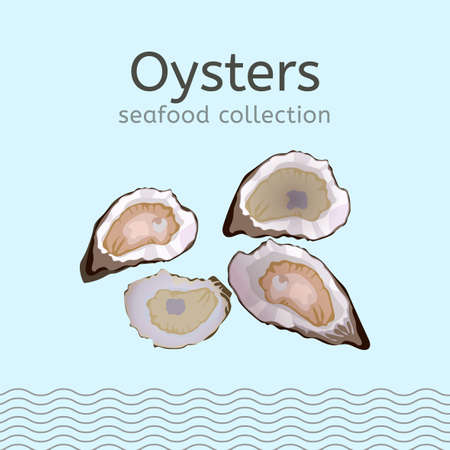 Oysters on a light blue background. Seafood collection. Vector illustration.