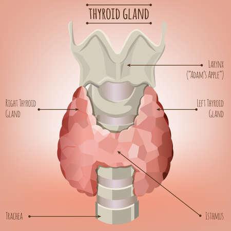 Thyroid gland image. Ilustracja