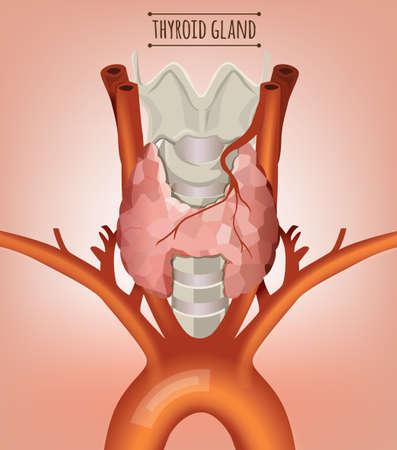 secretion: Thyroid Gland Image