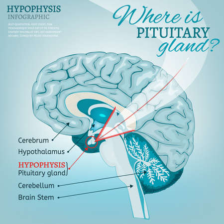 Pituitary gland vector