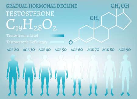Gradual hormone decline Vector Illustration