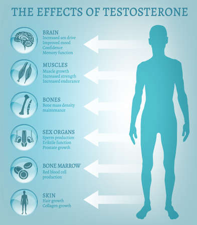 Testosterone effects infographics.